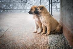 2 смешанных щенят породы сидя в виде спереди 2 маленьких собаки сидя на поле балкона стоковое изображение