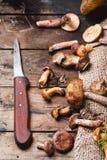 Смешивание грибов леса Стоковое Изображение RF