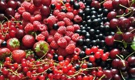 Смешивание зрелых ягод Стоковая Фотография RF