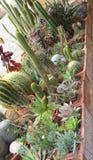 Смешивание много succulents и кактуса с острыми колючками и терниями Стоковое Фото