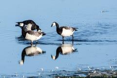 Смешивание птиц стоковые изображения