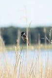 Смешивание птиц стоковые изображения rf