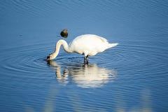 Смешивание птиц стоковая фотография rf