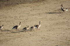 Смешивание птиц стоковое изображение rf