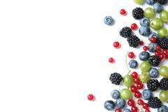 Смешивание различных свежих ягод стоковые изображения