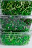 смешивание ростков зеленой травы в коробке Стоковое Фото