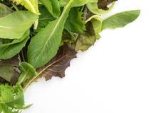 Смешивание салата с салатом rucola, frisee, radicchio и овечки Стоковое фото RF