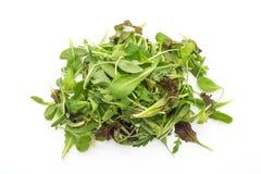 Смешивание салата с салатом rucola, frisee, radicchio и овечки Стоковые Изображения RF