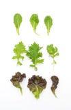 Смешивание салата с салатом rucola, frisee, radicchio и овечки Стоковые Фото