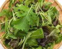 Смешивание салата с салатом rucola, frisee, radicchio и овечки Стоковая Фотография