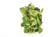 Смешивание салата с салатом rucola, frisee, radicchio и овечки Стоковая Фотография RF