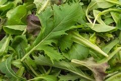 Смешивание салата с салатом rucola, frisee, radicchio и овечки Стоковое Фото