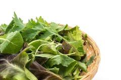 Смешивание салата с салатом rucola, frisee, radicchio и овечки Стоковое Изображение RF
