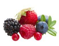 Смешивание свежих ягод стоковое изображение