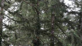 Смешивание светлого дождя и снега падая на лес и линии сток-видео