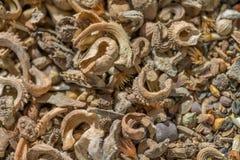 Смешивание семени Wildflower стоковые фотографии rf