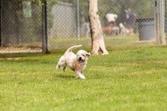 Смешивание собаки терьера стоковые изображения