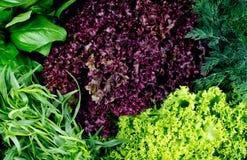 Смешивание с салатом Стоковая Фотография