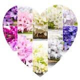 Смешивание цветеня весны Стоковое фото RF