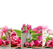 Смешивание цветеня тюльпана Стоковая Фотография RF
