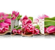Смешивание цветеня тюльпана Стоковые Изображения RF