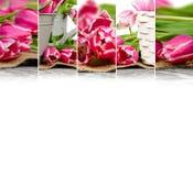 Смешивание цветеня тюльпана Стоковая Фотография