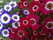 Смешивание цветка стоковая фотография