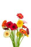 Смешивание цветков gerber стоковая фотография