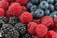 смешивание ягоды Стоковые Изображения