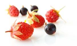 смешивание ягоды стоковые фотографии rf
