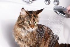 Смешная ванна кота стоковое изображение