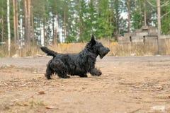 Смешная капризная собака Стоковые Изображения