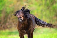 Смешная лошадь залива Стоковая Фотография RF