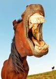 смешная лошадь Стоковая Фотография