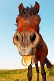 смешная лошадь Стоковое Фото