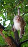 смешная обезьяна Стоковые Изображения