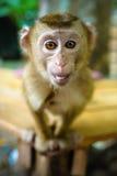 смешная обезьяна Стоковые Фотографии RF