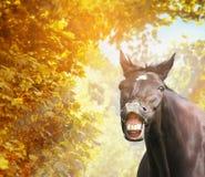 Смешная лошадь в листве осени в солнечности Стоковое фото RF