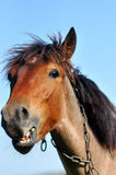 смешная лошадь Стоковые Фотографии RF
