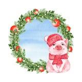 Смешная свинья и венок рождества Изолировано на белизне бесплатная иллюстрация