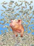 Смешная свинья на куче долларов Стоковое Изображение
