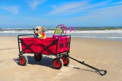 Смешная собака на каникулах стоковое фото
