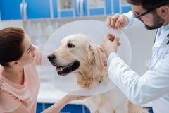 Смешная собака смотря его милое предпринимателя стоковое изображение
