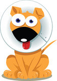 Смешная собака с елизаветинский воротом иллюстрация штока