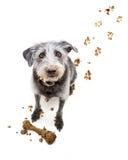 Смешная собака с тинной стороной стоковые изображения