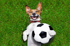 Смешная собака футбола Стоковое фото RF