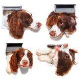 Смешная собака щитка кота Стоковое фото RF