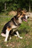 Смешная собака Стоковые Изображения RF