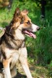 Смешная собака Стоковое Изображение