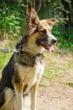 Смешная собака Стоковые Изображения